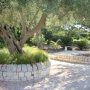 villa gisana esterni giardino