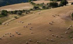 Wedding Planners in Sicily: Fiocchi di Riso